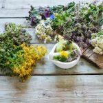 Les plantes médicinales et leur utilité