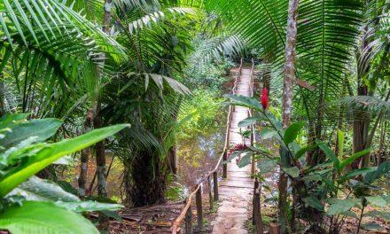 Les plantes médicinales les plus importantes de l'Amazonie