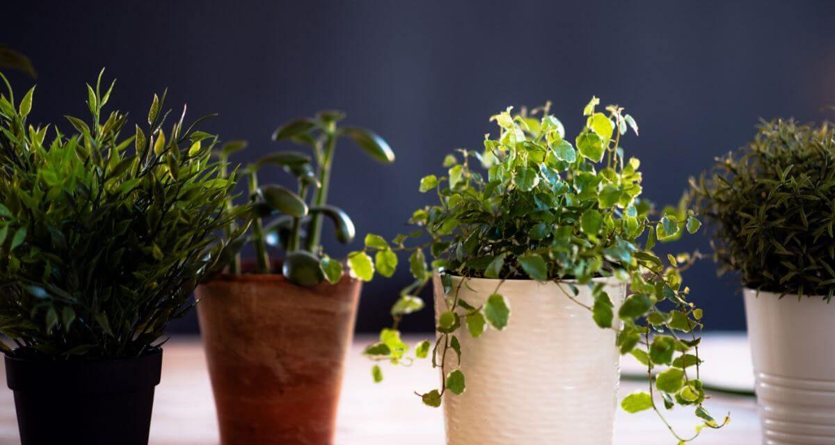 Les plantes aphrodisiaques les plus efficaces