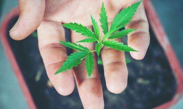 Santé : Quatre informations à avoir sur le Cannabis thérapeutique